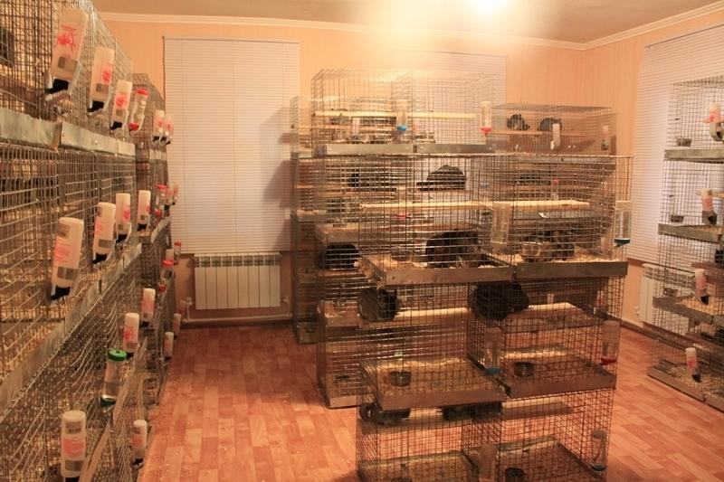 Шиншилла — уход и содержание в домашних условиях