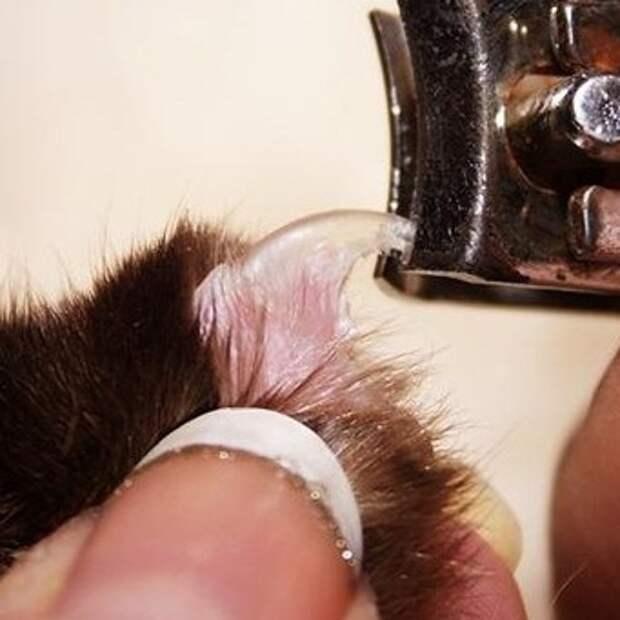 Как можно подстричь йоркширского терьера: стрижки для собак разного возраста