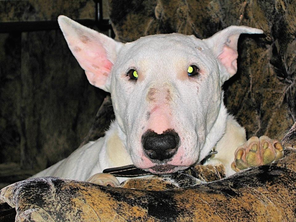 Самые старые собаки в мире: 10 наиболее долгоживущих пород