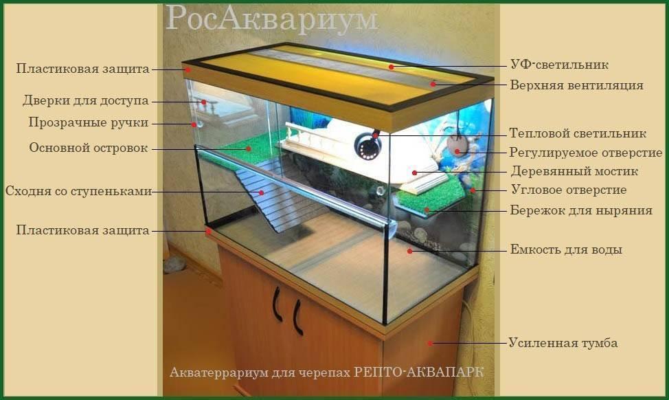 Что едят водные черепахи в домашних условиях, чем можно кормить маленьких декоративных аквариумных черепах и чем нельзя