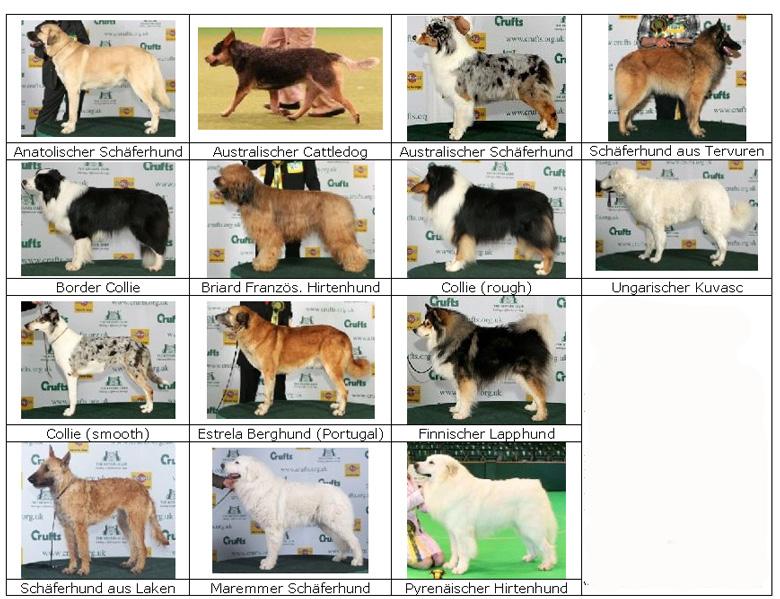 Как определить породу собаки по внешнему виду щенка тест