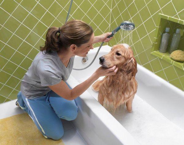Как убрать запах животных из квартиры: запах собаки, кошки или хорька, устраняем запах животной мочи