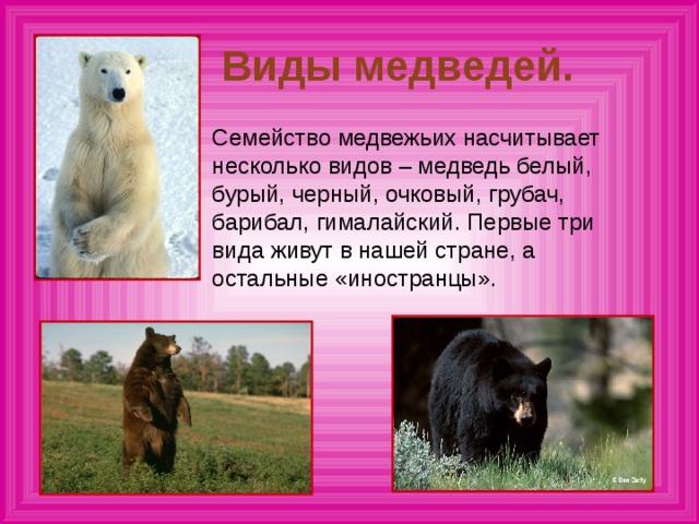 Медведь – описание, интересные факты, ареал, питание, враги, размножение
