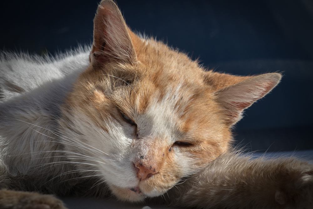 Анемия у кошек и ее типы по причинам гибели эритроцитовветлечебница рос-вет