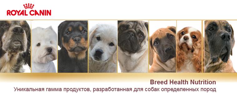 Как определять породу собаки, породистый, дворняжка или помесь ваш пес