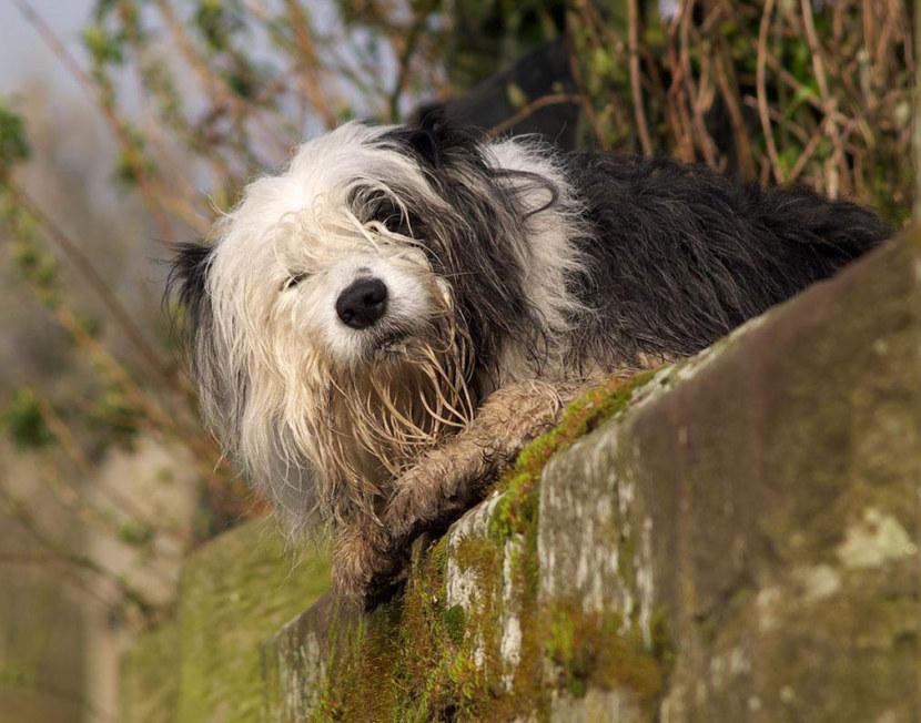 Топ-10 самых старых собак в мире: наиболее долгоживущие породы