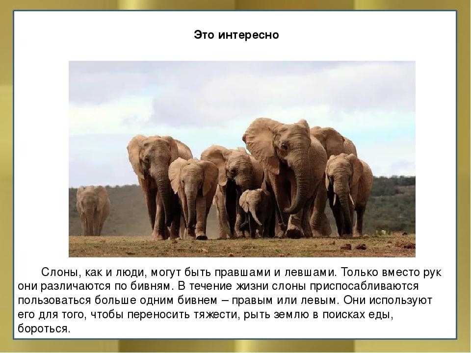 Слоны: интересные факты из жизни животных | интересный сайт