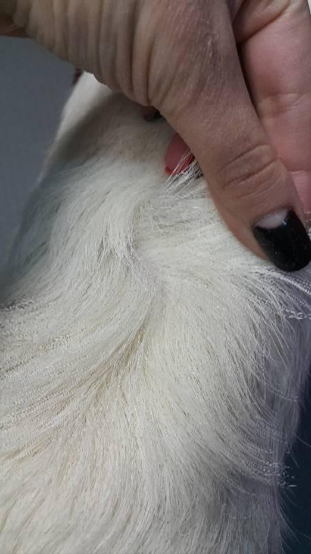 Линька у собак: все о возможных трудностях ухода