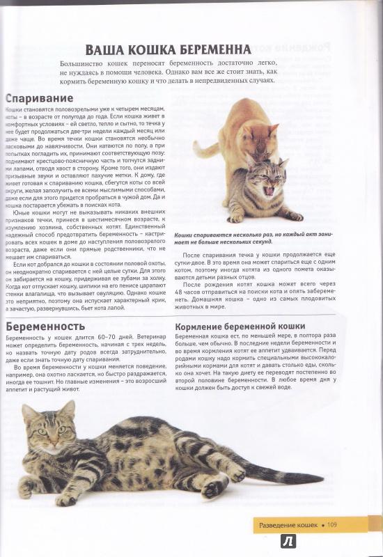 Глисты у кошек передаются человеку: чем они опасны - уз бсснмп