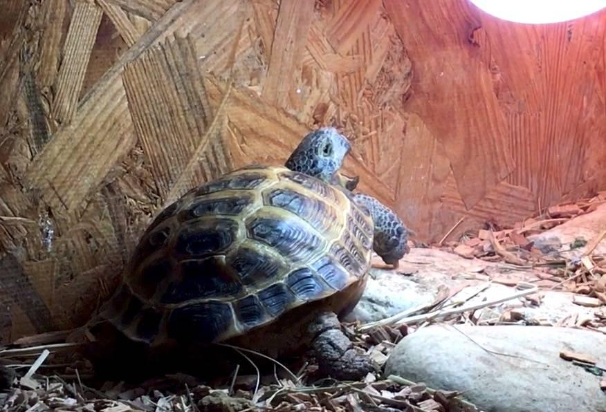 Черепаха - виды с фото и описанием, интересные факты, названия, уход, ареал обитания