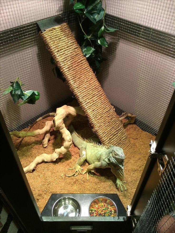 Террариум своими руками для хамелеона, черепахи, ящерицы, паука птицееда, улиток, как сделать из стекла и оргстекла