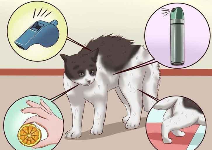 Котик после кастрации метит территорию: как быть?