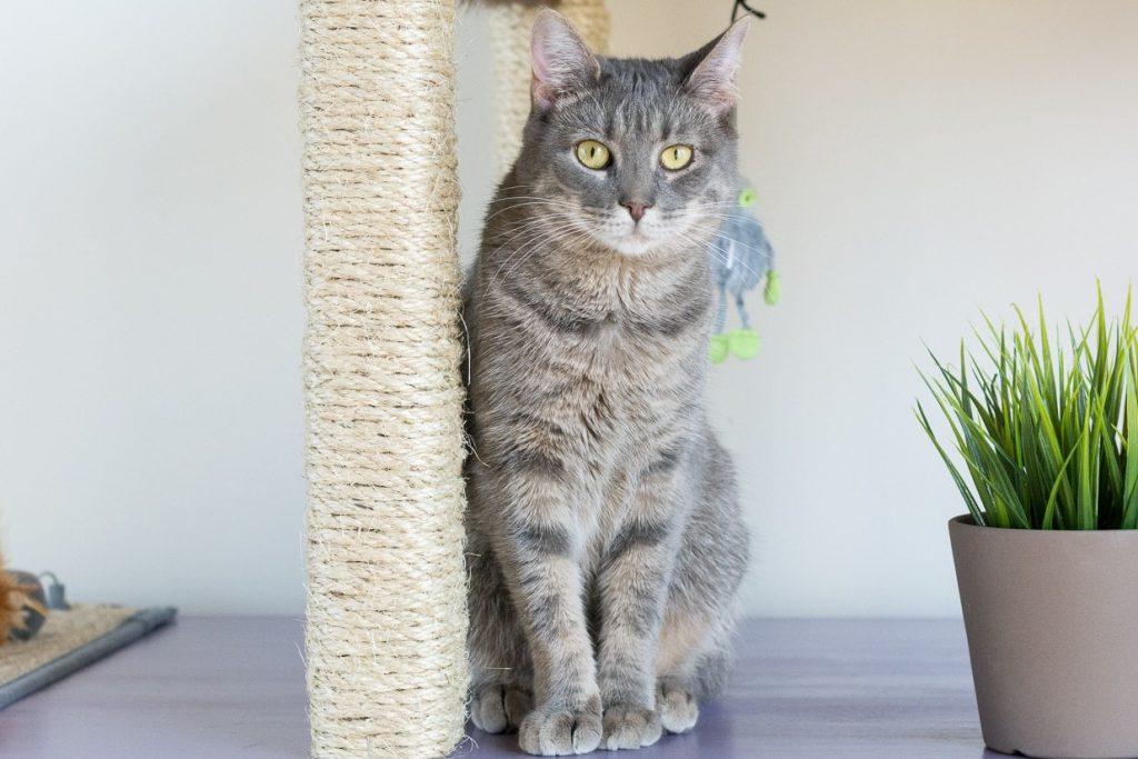 Как отучить кошку царапать мебель средство