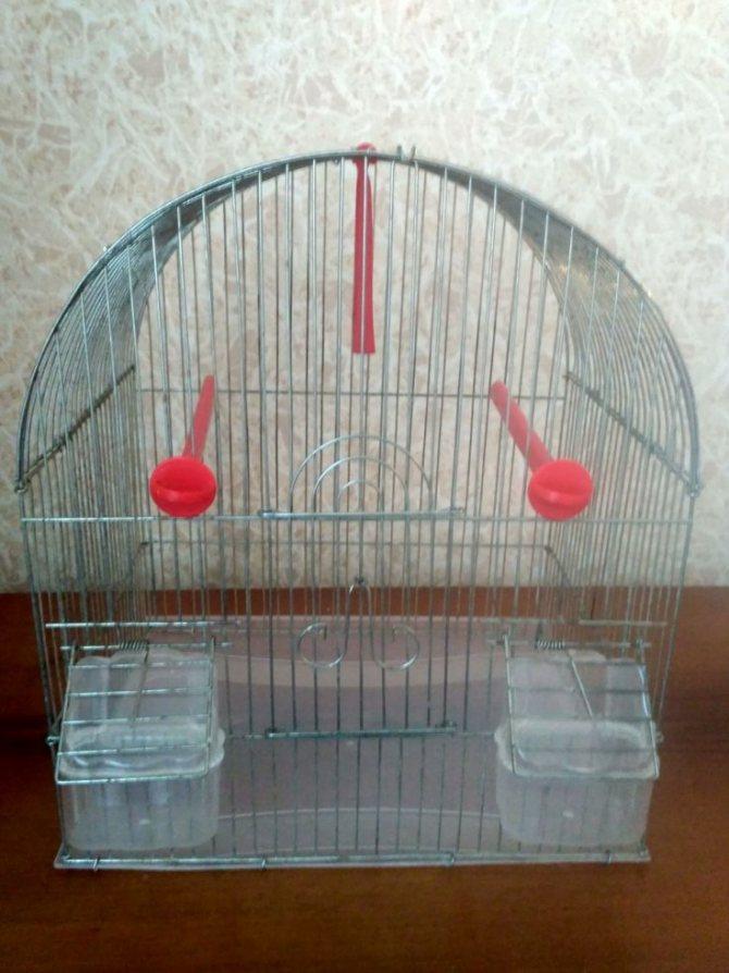 Что нужно в клетке для попугая и как ее выбрать