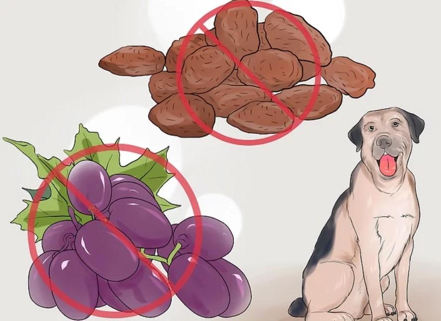 """Можно ли собакам яблоки? мнение ветеринаров   блог ветклиники """"беланта"""""""