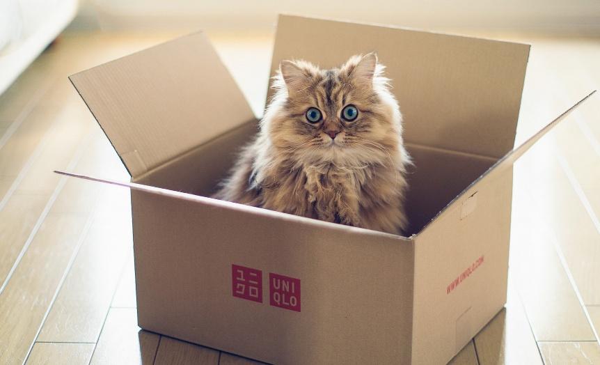 Почему кошки так любят коробки и пакеты   hill's
