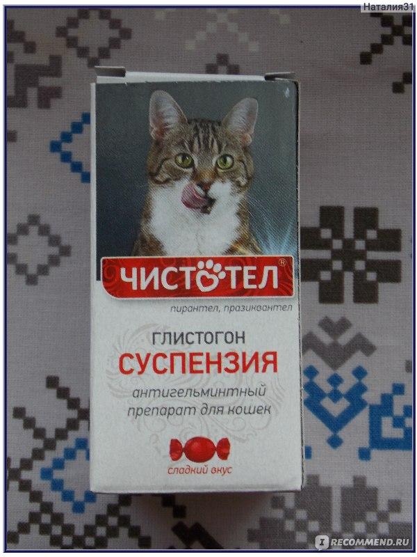 Как проглистогонить кошку: все о дегельминтизации кошек и котят, лечебные и профилактические меры