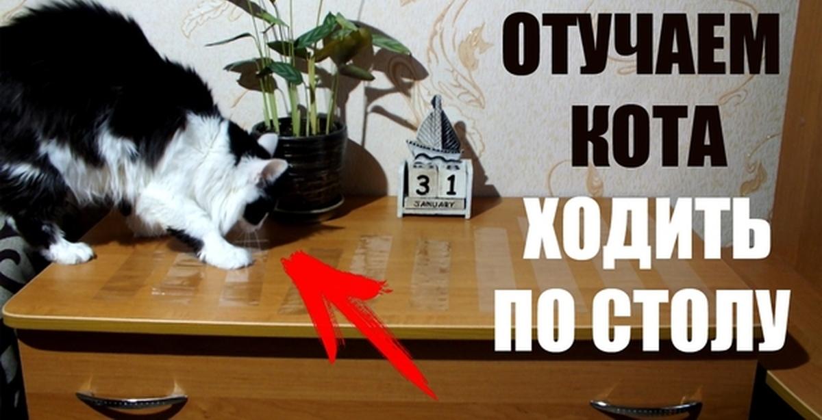 Как отучить кота залезать на стол и воровать еду
