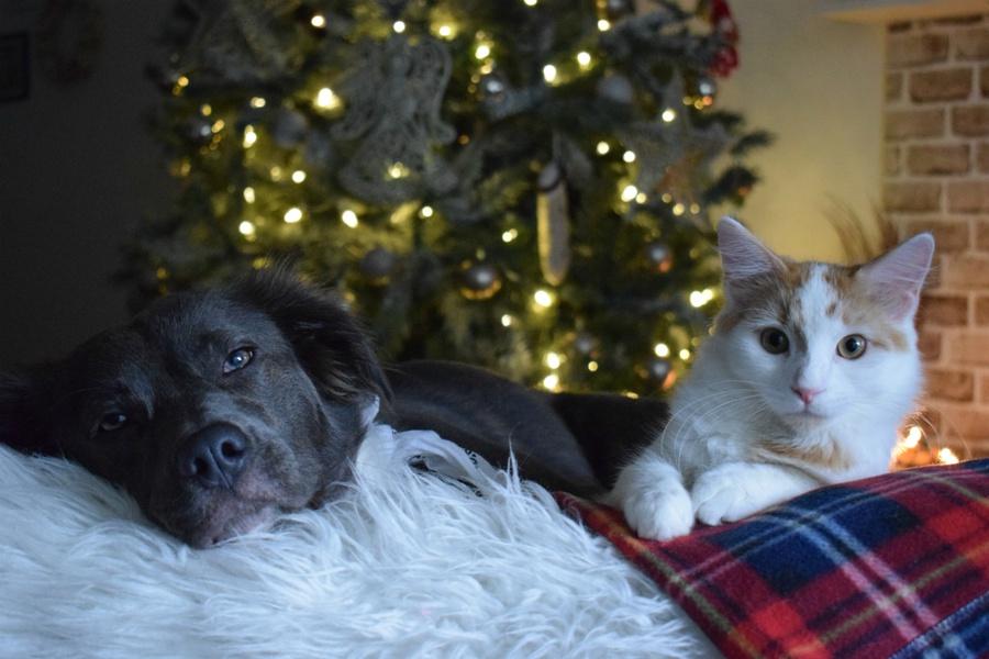 """Переезд с собакой: как его пережить и как помочь адаптироваться   блог ветклиники """"беланта"""""""