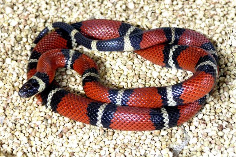 Всё о кормлении змей: как? чем? как часто?