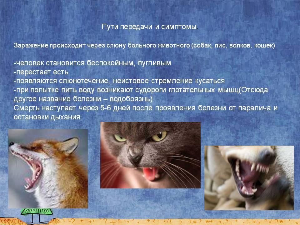 Что такое бешенство и почему опасны укусы или царапины домашних собак и кошек?