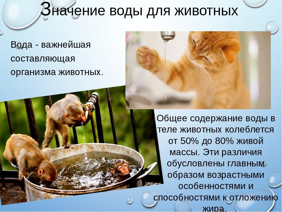 Как долго кошка может оставаться без еды?