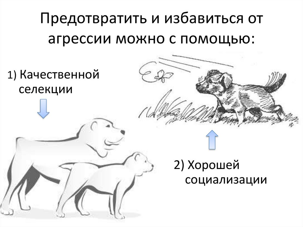 Причины агрессии кошек направленной на хозяина