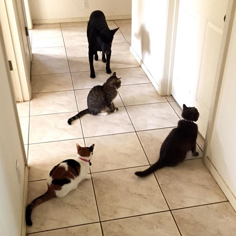 Почему кошка ходит за хозяином по пятам