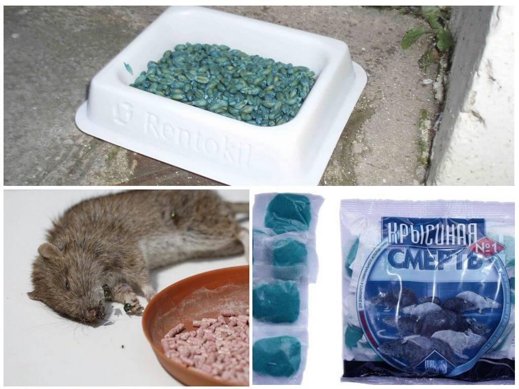 Отравление собак крысиным ядом