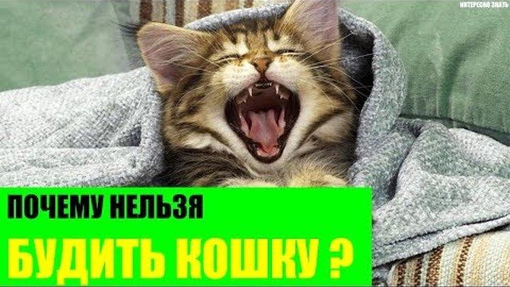 Кошка не дает спать ночью: решаем проблему