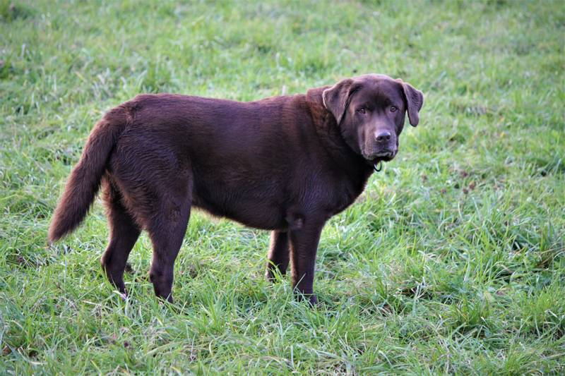 Черты и особенности характеров собак — для семи классов пород