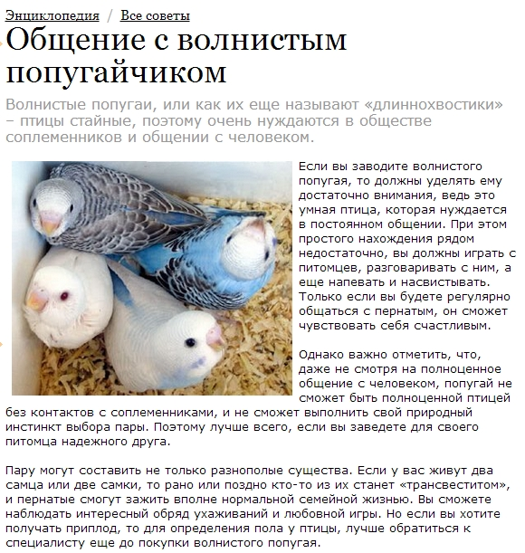 Как выбрать попугая для дома - советы и особенности содержания птиц
