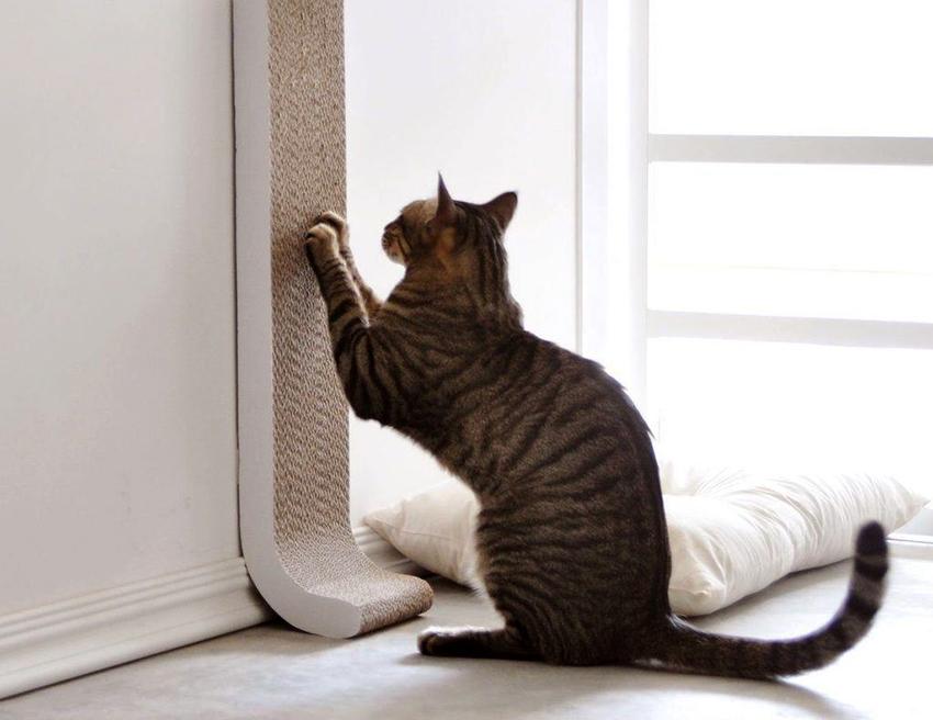 4 народных способа: как легко и быстро отпугнуть соседских кошек с дачного участка