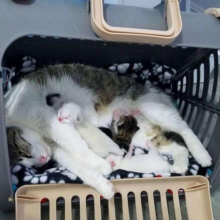 Как приучить котенка к лотку быстро. советы по приучению котенка ходить в лоток в квартире - wlcat.ru