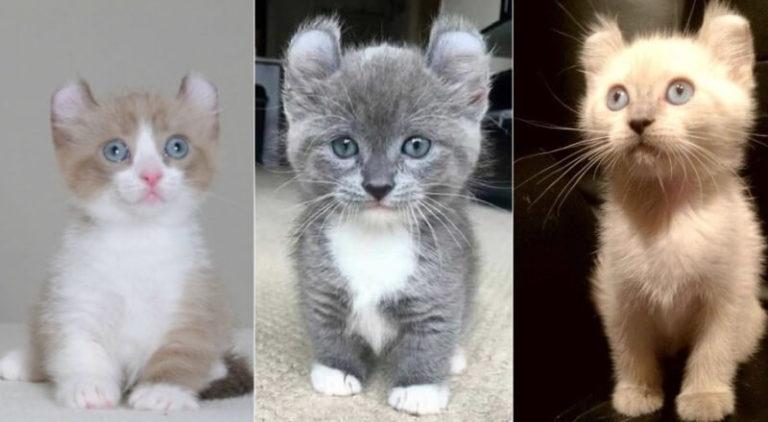 Самые маленькие породы кошек: 5 вечных котят