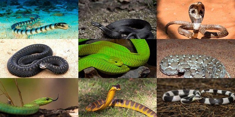 Виды змей (ядовитые, неядовитые, домашние): сколько их есть, описание, название с фото
