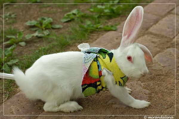 Как выбрать самое красивое имя для кролика — советы и примеры имен для мальчиков и девочек