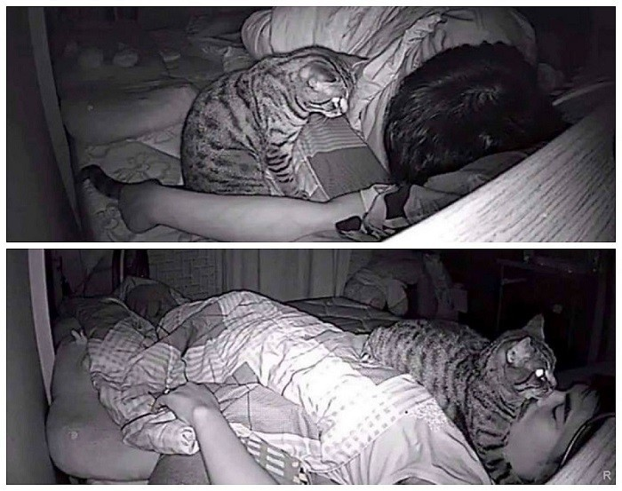 Панические атаки перед сном, паническая атака при засыпании