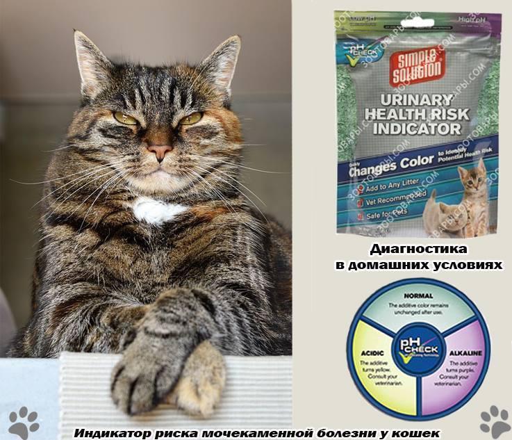 Лечение мочекаменной болезни у кошек в домашних условиях, питание и профилактика