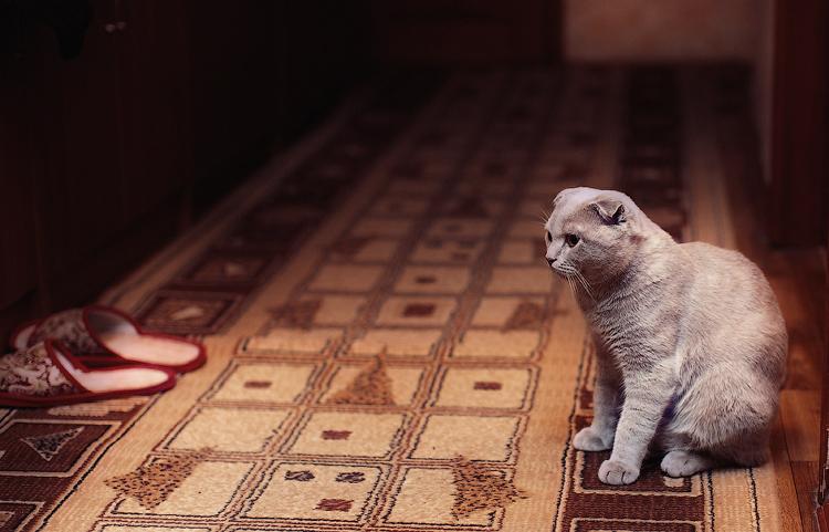 Как наказать котёнка, чтобы он не нагадил, как наказать кота или кошку, если гадит