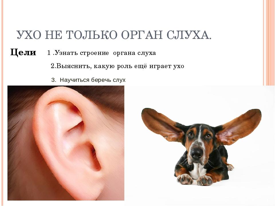Сухой нос у кота: признак заболевания или естественное явление