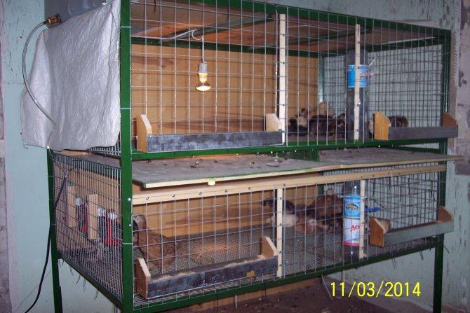 Разведение и содержание кроликов в домашних условиях - технология бизнеса