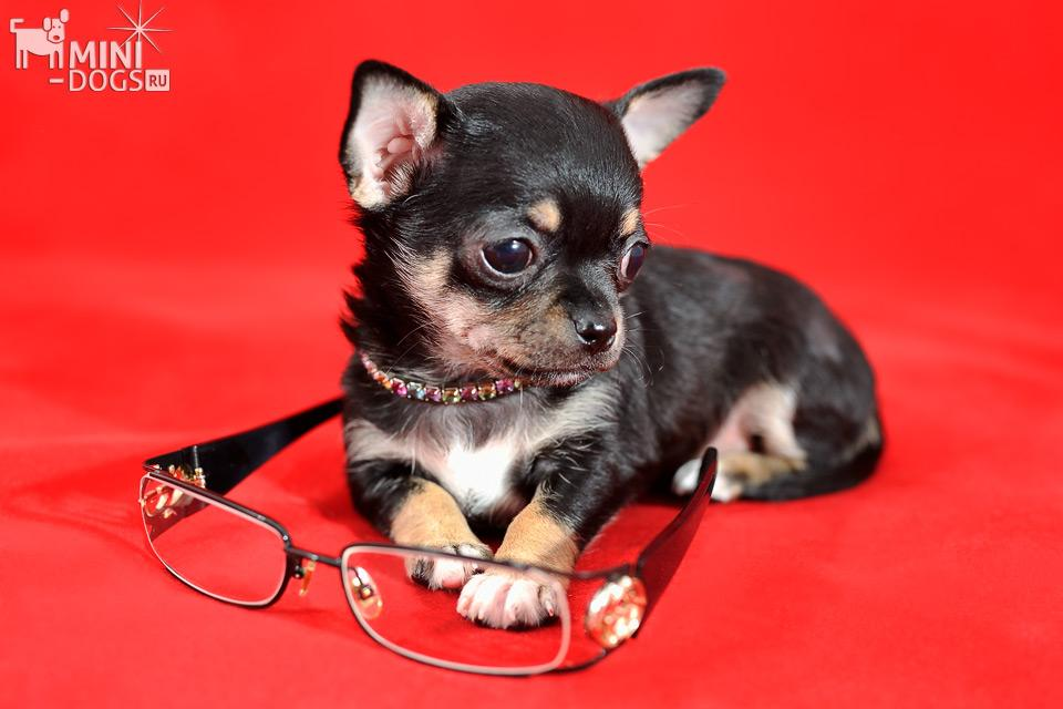 Клички для маленьких пород собак девочек   сайт зовут zovut.com