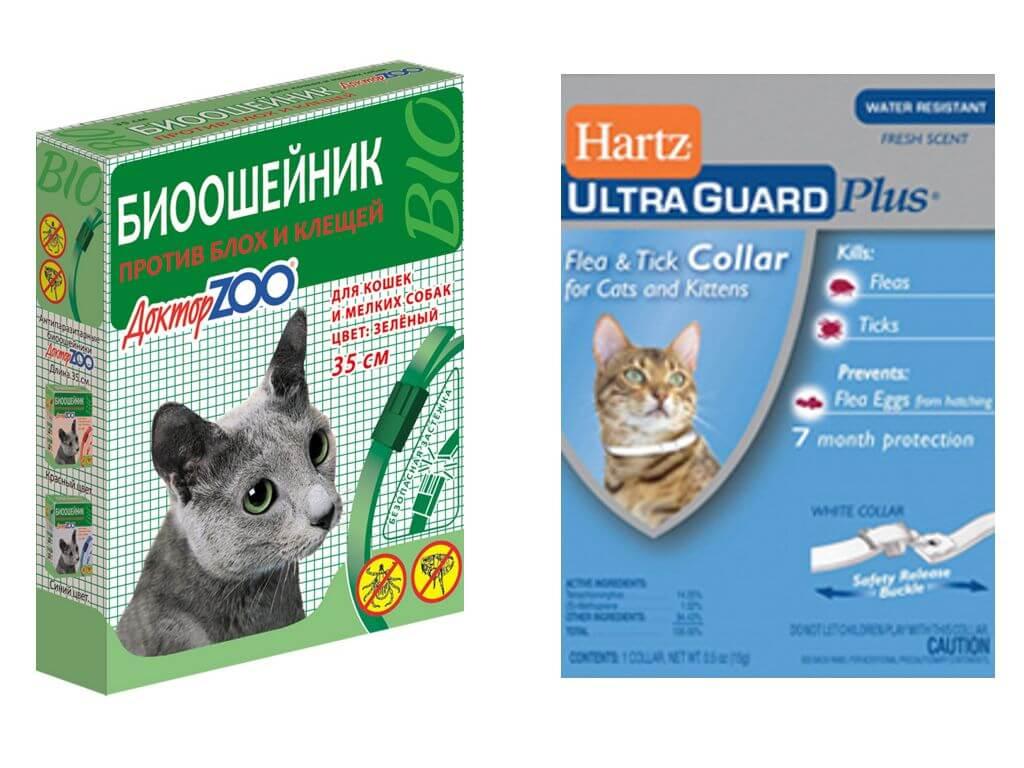 Блохи у котят 1-2 месяца - как вывести блох у котенка (капли от блох) | нвп «астрафарм»
