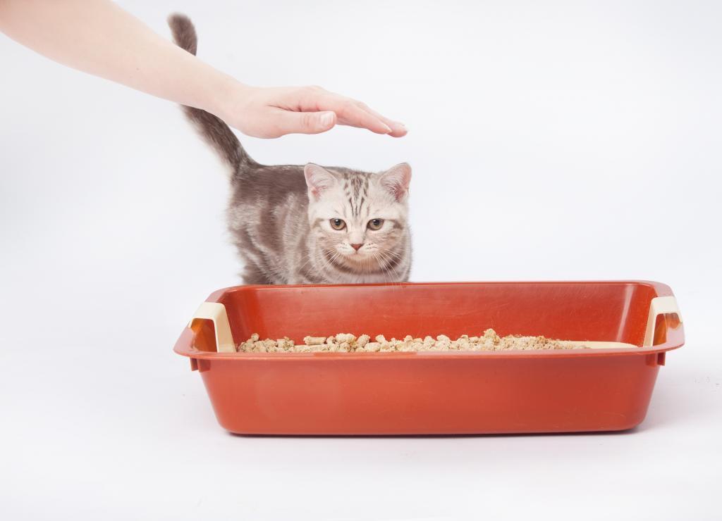 Кошка перестала ходить в лоток — алгоритм решения проблемы
