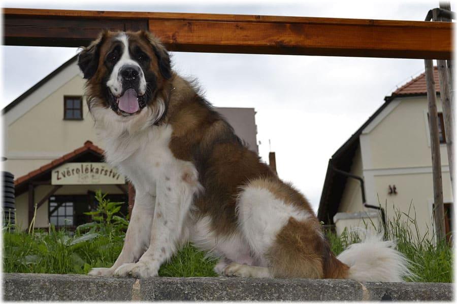 Какая лучшая порода собак для охраны частного дома - небольшие и средние породы собак для охраны частного дома | советы по недвижимости