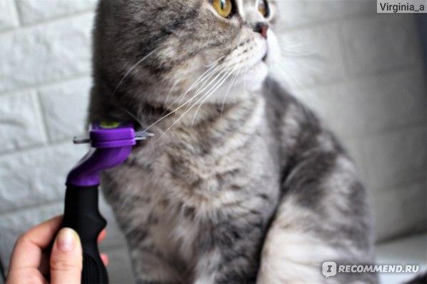 Кошка сильно линяет: причины, рекомендации