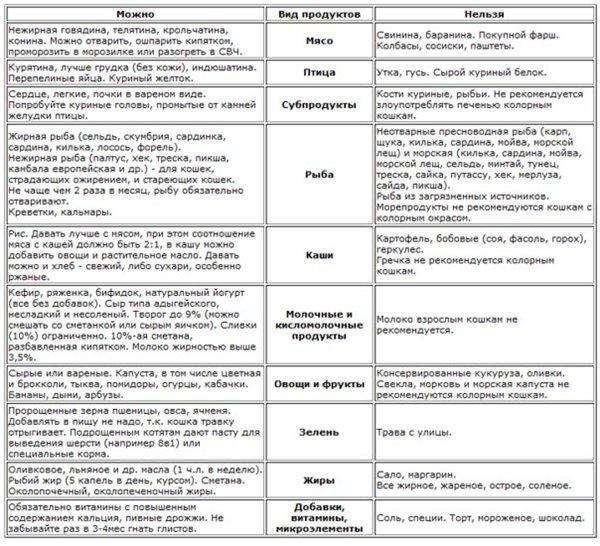 Чем кормить котёнка в 1, 2, 3 месяца и далее — pet-mir.ru