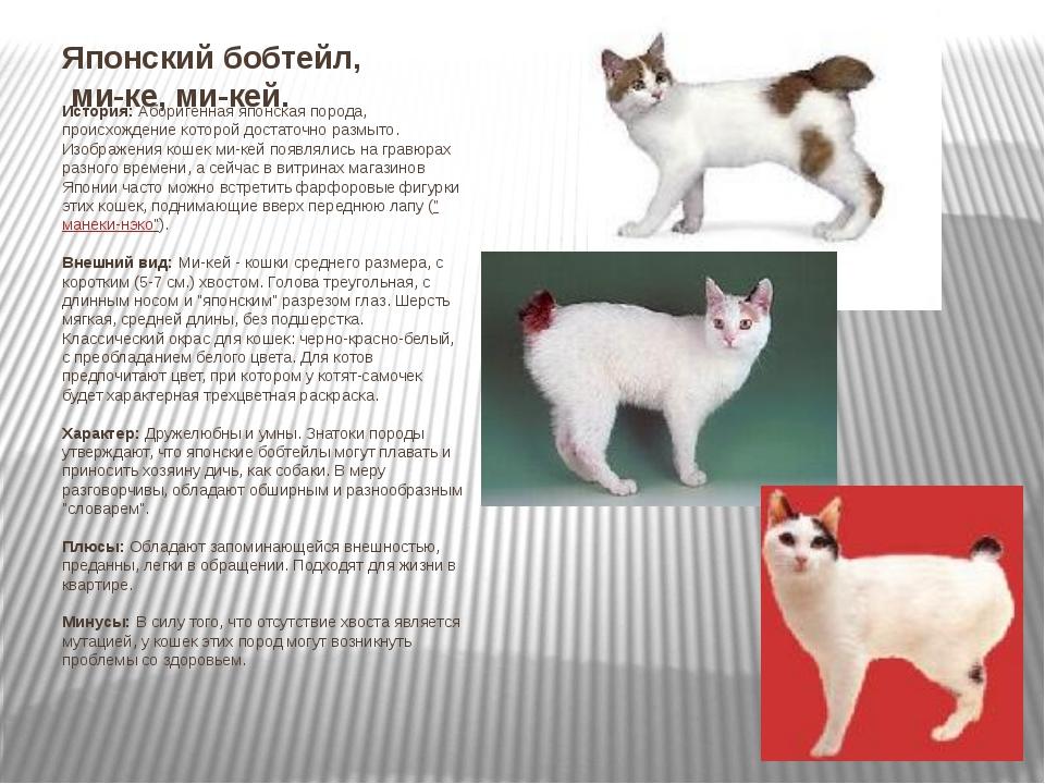Меконгский бобтейл: описание породы с фото – pet-mir.ru
