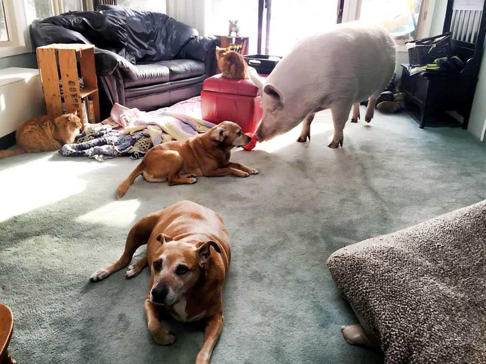 ᐉ что делают собаки когда никого нет дома - фото - zoovet24.ru